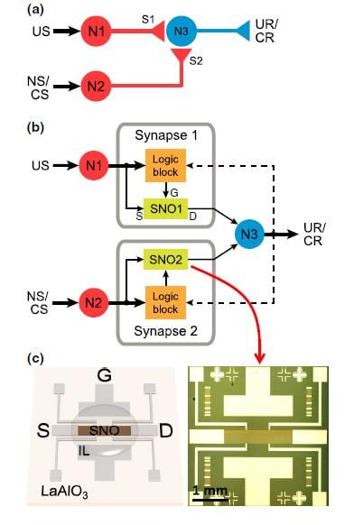 Nickelate brain-inspired circuits with ionic liquid gates